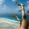 Остров Сокотра - затерянная жемчужина Индийского океана