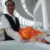 Необычный конкурс красоты в Китае: выбираем самую золотую рыбку