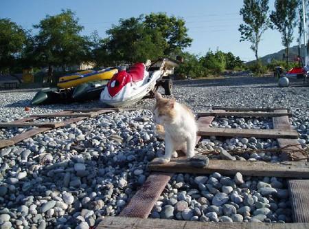 Провожал нас морской кот