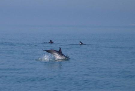 А дельфины моооокрые, а дельфины дообрые...