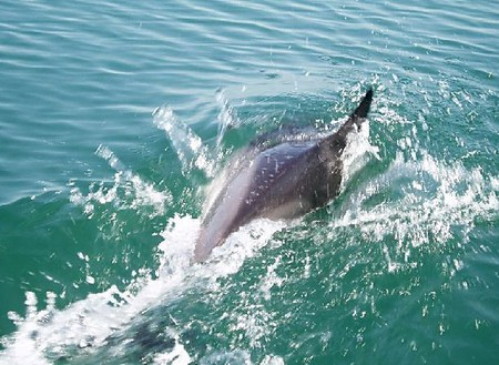 Ничего не сказала рыбка… хотя дельфины и не рыбы))