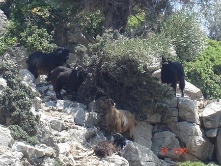 Мармарис. Незабываемое путешествие по Эгейским островам — фото 5