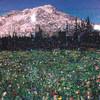 Том Денингер - повелитель картин из мусора и хлама.